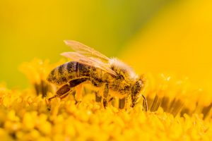 Nutritious Raw Bee Pollen