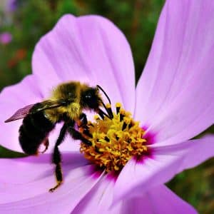 Bees Pollinating Flower