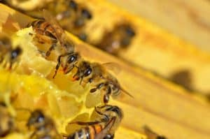 The Miracle of Honeycomb