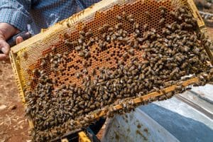 Commercial Beehive